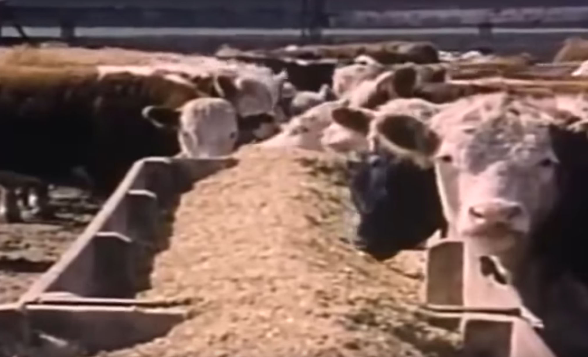 Modern Marvels: The Science Behind Cattle Ranches