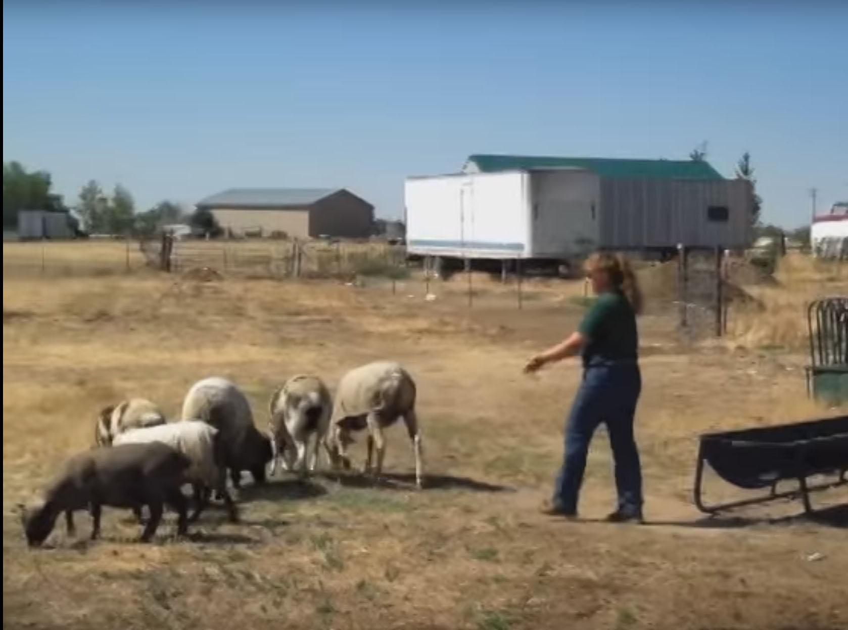 Raising Sheep and Goats For Profit, Colorado
